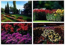 Mainau , Blumeninsel im Bodensee , Dahlienschau , Ansichtskarte , gelaufen