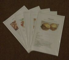 south african food recipes, biltong, boerewors, spices, chips Free Postage
