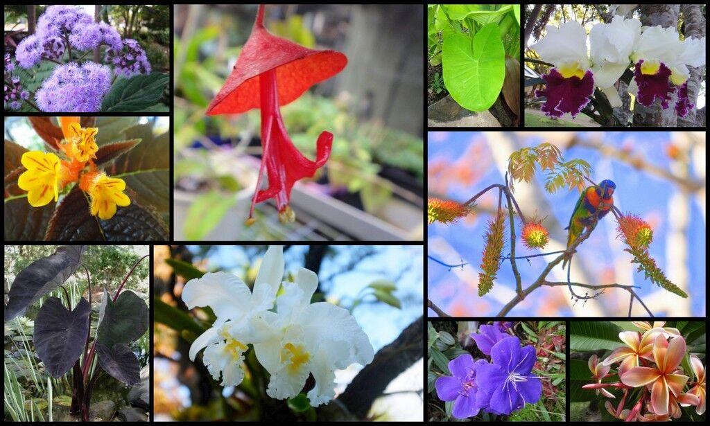 Louises Plants