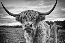 HIGHLAND COW ANIMAL POSTER PRINT STYLE B 24x36 HI RES 9 MIL PAPER