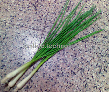 6X Faux Spring Onion artificial vegetable fake food house kitchen BBQ decor Prop
