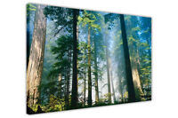 FOREST WITH TALL TREES CANVAS PICTURES WALL ART PRINTS FRAMED LANDSCAPE POSTERS