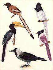 Indian Tropical Birds of Paradise Rare Handmade Miniature Nature Ornithology Art