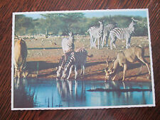 "VINTAGE COLOUR POSTCARD "" WATERING PLACE IN THE BUSHVELD, SOUTH AFRICA ""."