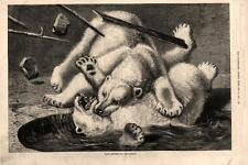 Fight Between Two Polar Bears    -    1877