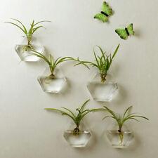 Hexagon Wall Hanging Planter Glass Hydroponic Vase Plant Pot Terrarium ~13cm