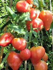 10 graines de tomate très rare Cœur du Tibet heirloom tomato seeds méth.bio