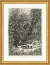 Haselhühner Bodmer Tiere Wald Vögel Äste Küken Nest Bäume Geäst Holzstich E 6255