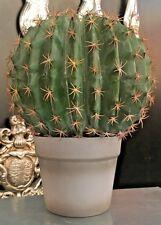 Artificial Potted Barrel Cactus Desert Plant Faux Botanical 33cm H x 25cm Dia