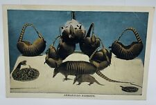 COMFORT, TEXAS ~ 1909  ARMADILLO BASKETS Macabre shells drying Postcard