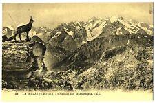 CPA 05 Hautes-Alpes Massif de la Meije chamois sur la Montagne