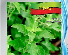 2400 seeds Thai Holy Basil Kaprao,Ocimum Sanctum Tulasi Herb Food Spicy