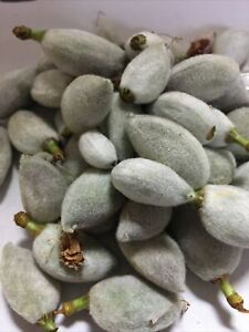 California Green Almond, 2021 Harvest Fresh Snack Almond  5 LB box Frees hipping