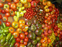 Tomato Gardening Farming Tomatoes 20 Books CD Lot Culture Heritage Vine Canning