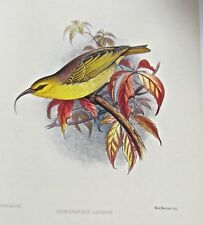 Frederick Frohawk Hawaiian Nukupuu Offset Lithograph Print No 1  13x10