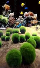 Nano Marimo x 5 pcs -  Live Plant for Salt Water Aquarium Coral Sea Weed Rock