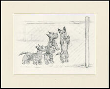SCOTTISH TERRIER THREE DOGS BEHIND FENCE 1930'S KF BARKER DOG ART PRINT MOUNTED