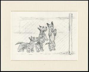SCOTTISH TERRIER THREE DOGS BEHIND FENCE 1930'S KF BARKER DOG ART PRINT MOUNTED