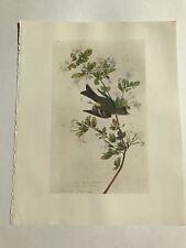 John James Audubon Bookplate Plate 381 Bird Print 1966 Eastern Wood Pewee