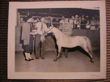 "Grand Champion Shetland Mare ""Dainty Doll"" Original Horse Pony Photo"