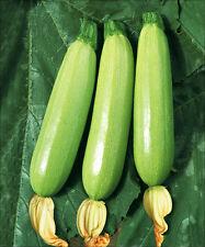 15 Squash Seeds Cucurbita Pepo Cocozelle Organic Vegetables
