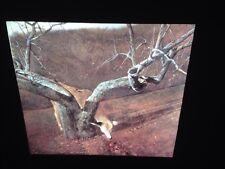 "Andrew Wyeth ""Jacklight"" American Regionalism Realism Art 35mm Slide"