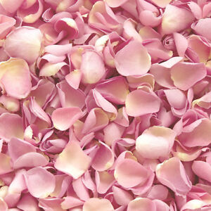 X1 Pint Biodegradable Natural.Dried Pink Rose Petal Wedding Confetti Eco UK