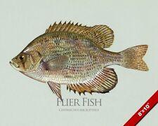 FLIER SUNFISH FISHPAINTING SOUTHERN US AMERICAN FISHING ART REAL CANVAS PRINT