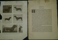 Dachshund Breed History & Photos from the 1906 Dog Book by James Watson