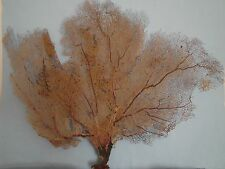 "23"" x  20"" Large Natural Pink Color Sea Fan Reef Coral"