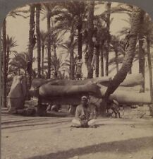Egypt. Statue of Ramses II Embellishment of his Now Vanished Temple - Stereoview