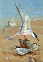 No framed Oil painting nice birds Seagull sea birds by beach seascape canvas