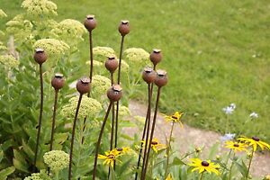 Medium Metal Poppy Seed Head Decorative Garden Rusted Stake Plant Support. 1.12m
