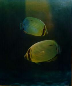 BLAKE TWIGDEN ~ SUPERB ORIGINAL OIL PAINTING ~ TROPICAL FISH