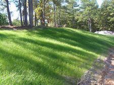 SeedRanch Sahara Bermuda Grass Seed Coated - 2 Lbs. (Plants - 1000 Sq.ft.)