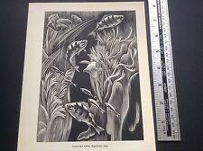 1950s Wood Engraving Print Aquarium by Clifford Webb: Fish, Fishtank