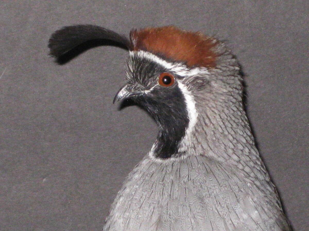 Sonoran Desert Feathers