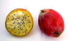 CEREUS PERUVIANUS 100 Semi Seeds Graines Samen semillas