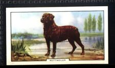 Gallaher Dogs 2nd Series 1938 - Rottweiler No. 40