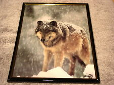 Wolf In Snow 8X10 Framed Picture Print