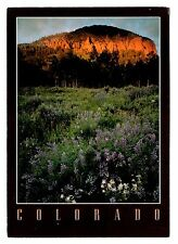 Mt Crested Butte Colorado Postcard Wild Flowers Mountain Spring Unposted