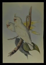 """John Gould Blood stained Cockatoo Bird Limited Edition Print 21"""" x 14.5"""""""
