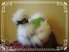 5 SILKIE CHICKEN SADDLE HEN APRON FEATHER PROTECTION HATCHING EGGS POULTRY USA