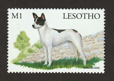Canaan Dog *Int'l Dog Postage Stamp Art Collection * Great Gift Idea *