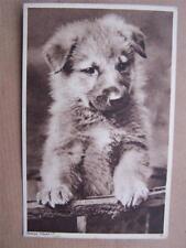 Dog Dogs Puppy Puppy's