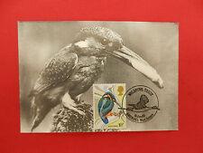 timbre 1° jour  wildfowl trust - kingfischer - 16/01/1980