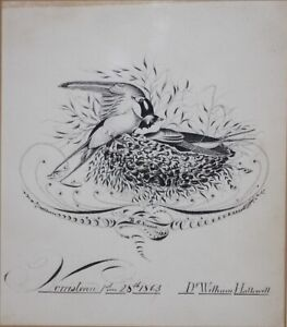 WILLIAM HALLOWELL-PA Realist-Original Signed Ink/Quill Drawing-Nesting Birds
