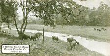 Hershey,PA. A Hershey Herd in Clover, a Hershey candy bar post card