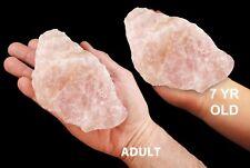 "Rose Quartz 5"" 1 1/2 - 2 Lb Rock Mineral Specimen Heart Chakra Healing Crystal"