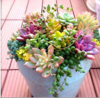 100 MIX seeds Best-selling Rare Cactus plants Japanese Succulents plants
